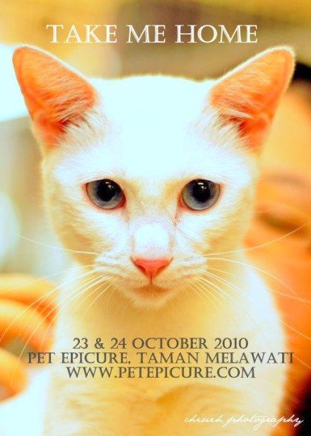 Pet Epicure Adoption Drive