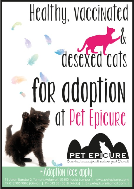 Pet Epicure - adoption poster